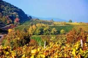 Landschaft_Herbst_Edenkoben