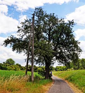 Birnbaum06_Feldweg_gering